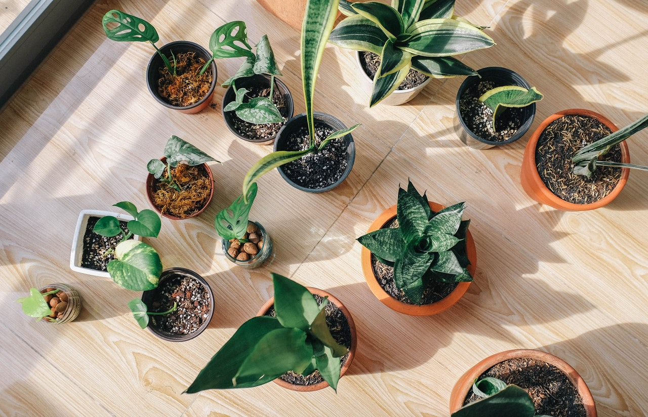 You are currently viewing Snake Plant Types: Different Varieties and Cultivars