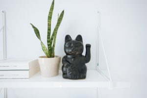 Read more about the article Is Snake Plant toxic to cats? Symptoms and first aid