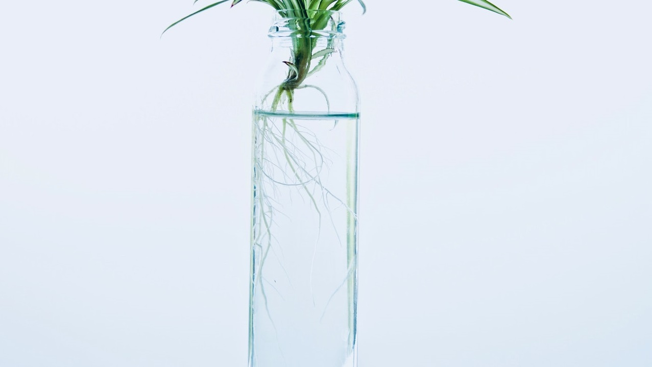 Read more about the article Propagating a Snake Plant in water – All you need to know