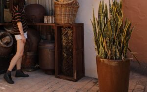 Read more about the article Outdoor care guide for snake plants