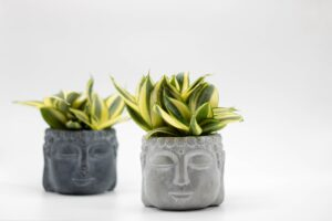 Read more about the article Snake Plant for Feng Shui benefits